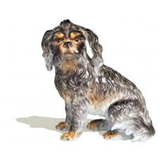 Болоньезе собака сидит