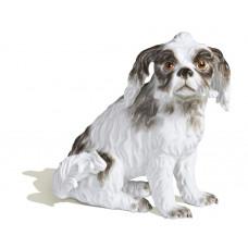 Болоньезе Собака